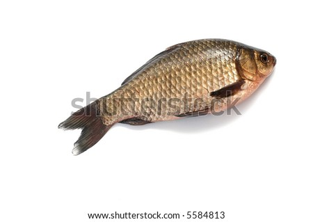 An image of fish on white background