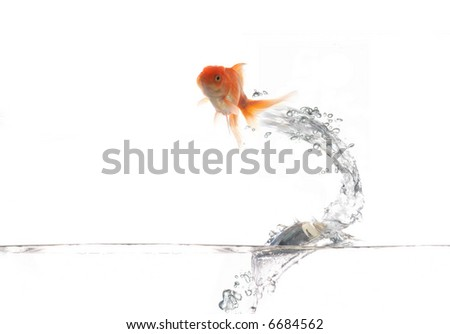 An image of flying goldfish