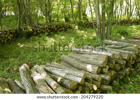 An Image of Forest