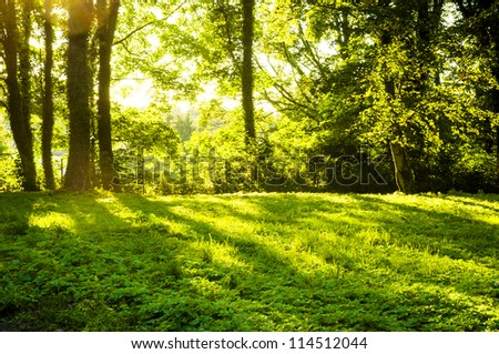 An image of Forest in the morning with sunrays - stock photo