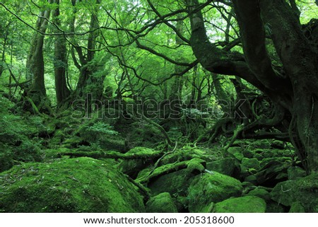 An Image of Forest Of Princess - stock photo