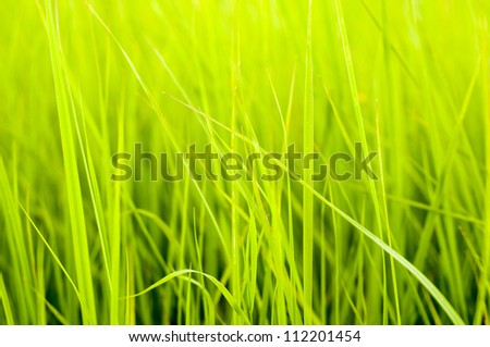 An image of Fresh green grass - stock photo