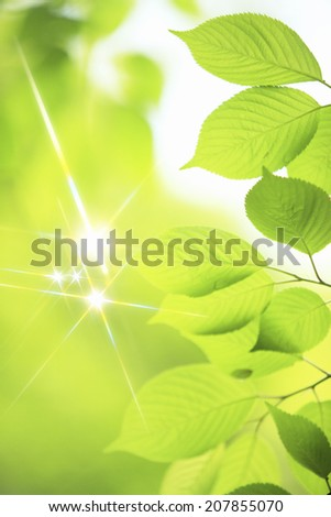 An Image of Fresh Green Sparkling