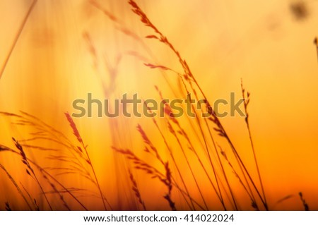 An image of grass silhouette at sunset, blurred background - stock photo