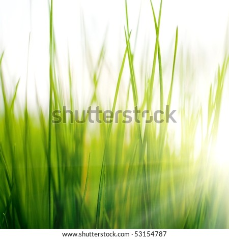 An image of green grass and sunlight