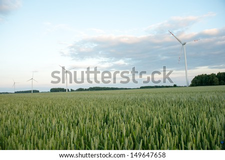 An image of Green wheat ears on the field