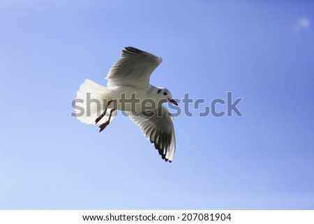 An Image of Gull Flapping