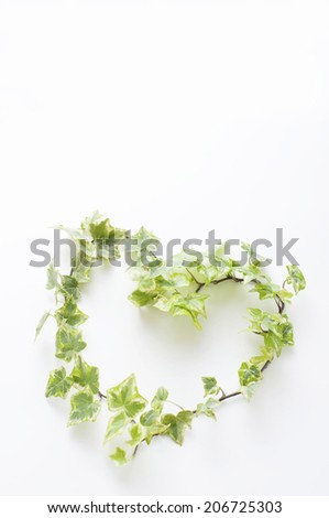 An Image of Heart-Shaped Ivy