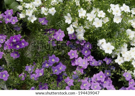An image of Image of flowers