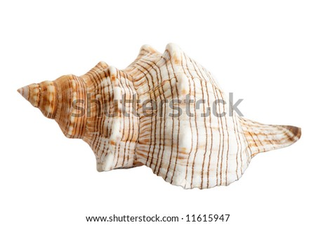 An image of isolated seashell