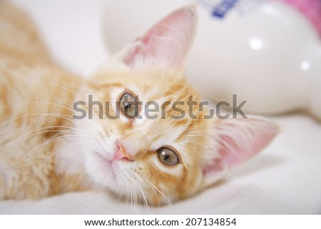 An image of Kitten Staring
