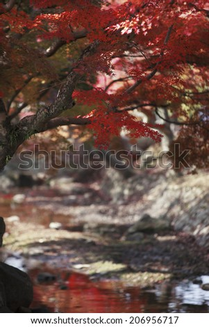 An Image of Nara ,Autumn Leaves