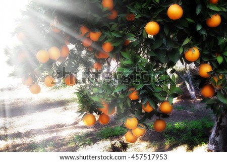 an image of orange tree