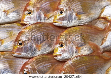 An Image of Red Sea Bream - stock photo