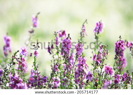 An Image of Salvia