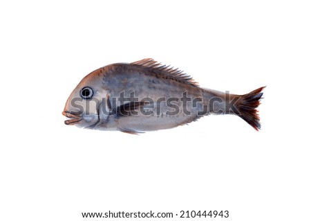 An Image of Sea Bream