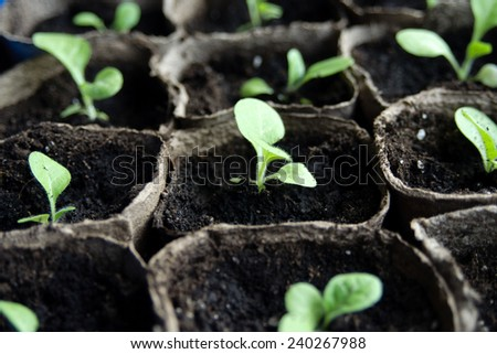An image of seedlings in flowerpots - stock photo