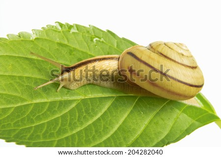An Image of Snail