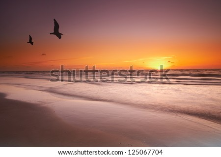 An image of sunrise and birds - stock photo