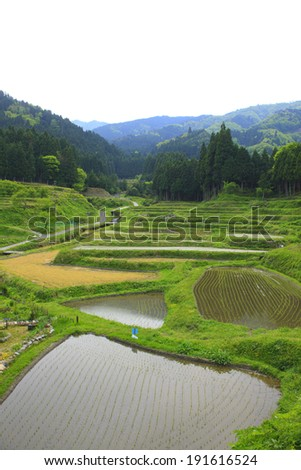 An image of Terraced rice fields