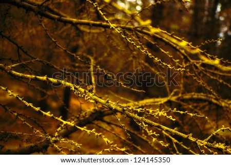 An image of the forest in autumn - stock photo