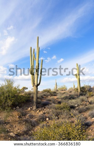 An image of the Superstition desert in Arizona shows the rugged detail of a dry wilderness with a saguaro cactus - stock photo