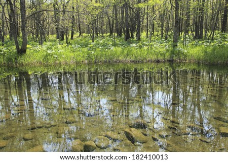An image of Waterside of spring