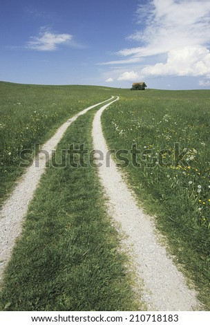 An Image of Way Of Grassland