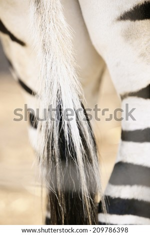 An Image of Zebra