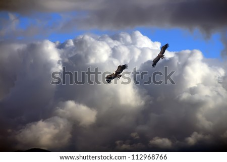 an impressive eagles flying sky with clouds