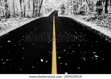 An infrared photo taken of an road through a forest during the autumn season.  Photographed with a 590nm infrared camera.  Selective color.  - stock photo