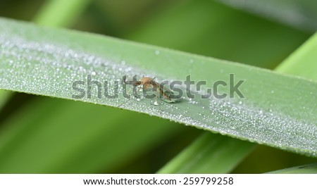 An insect to stay on green leaves, close-up   - stock photo