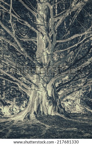 An inverted image of a spooky gnarled cedar tree truck with many branches growing outward.  Processed in negative for mood, and lightly toned.   - stock photo