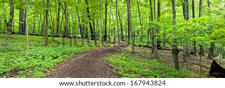 An inviting hiking path winds it's way through the spring woods at The Morton Arboretum in Lisle, Illinois. - stock photo