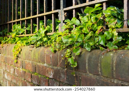 An iron fence on top of an ivy covered wall. - stock photo