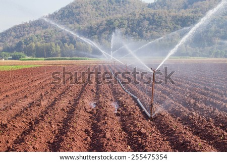 An irrigation pivot watering a field of corn - stock photo