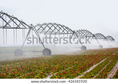 An irrigation pivot watering a flower field - stock photo