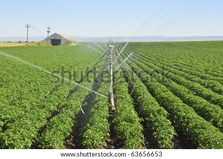 An irrigation wheel line waters a potato field. - stock photo