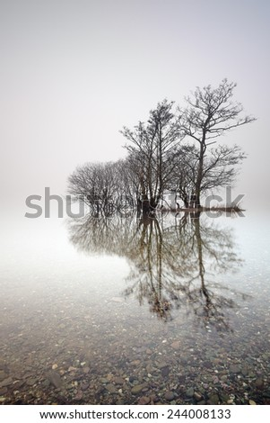 An Island of Trees reflecting on a mist covered Loch at Milarrochy bay, Loch Lomond.