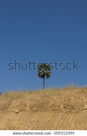 An isolated palm tree