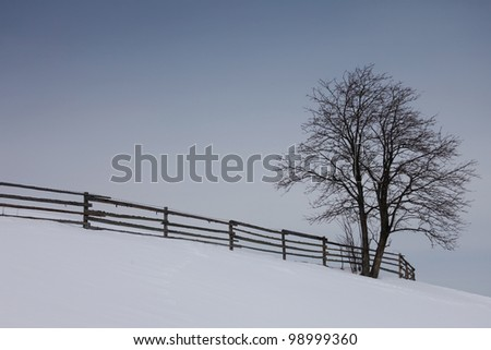 An isolated tree in a winter landscape with a nice vintage fence - stock photo