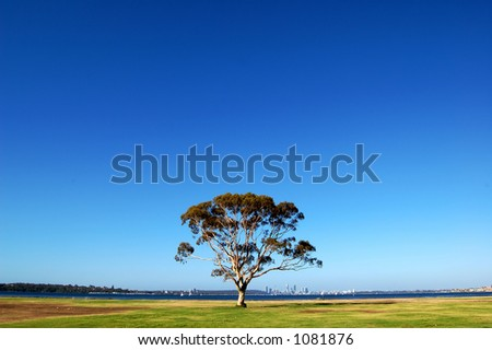 An isolated tree under the blue sky - stock photo