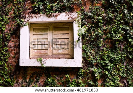 an ivy covered wall with a window.