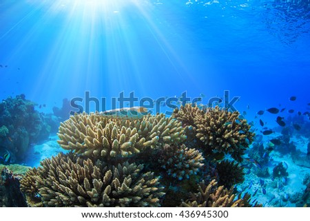 An ocean underwater reef with sun light through water surface. Coral bottom with colorful fish as marine tropical aquatic natural background. - stock photo
