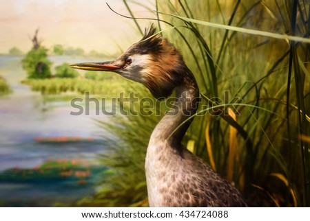 An old, antique stuffed great crested Grebe.