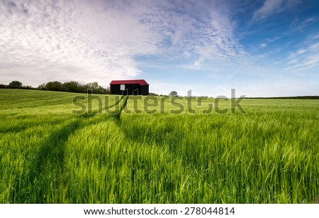 An old barn in a field of lush green barley - stock photo