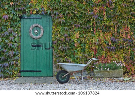 An old barn with a wheelbarrow in front is covered with beautiful colored ivy during autumn - stock photo