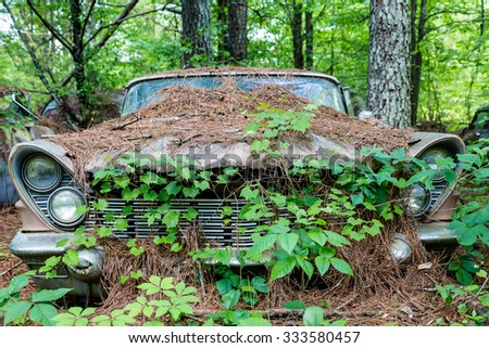 An Old Car Covered in Vines and Pinestraw