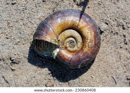 An old empty snail shell close-up on the ground - stock photo