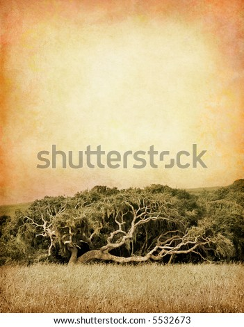 An old, gnarled oak tree along Pacific Coast Highway near California's BIg Sur coastline. - stock photo